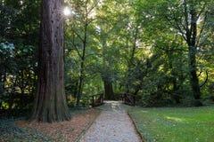 Meningspark Groen gebladerte van bomen sun& x27; s de stralen maken hun manier door het Goed voor een kaart, kalender of screensa Royalty-vrije Stock Foto's