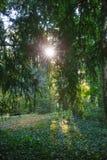 Meningspark Groen gebladerte van bomen sun& x27; s de stralen maken hun manier door het Goed voor een kaart, kalender of screensa Stock Afbeeldingen