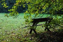 Meningspark Groen gebladerte van bomen sun& x27; s de stralen maken hun manier door het Goed voor een kaart, kalender of screensa Royalty-vrije Stock Fotografie
