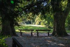 Meningspark Groen gebladerte van bomen sun& x27; s de stralen maken hun manier door het Goed voor een kaart, kalender of screensa Stock Afbeelding