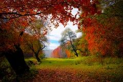 Meningstrog de rode bladeren stock afbeelding