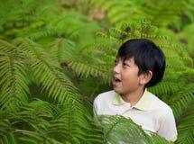 Menino asiático na floresta fotografia de stock