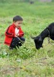 Menino asiático que olha a cabra preta fotos de stock royalty free