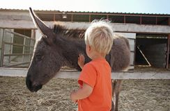 Menino bonito da criança tocante e que afaga o asno do bebê na exploração agrícola em Chipre imagem de stock royalty free
