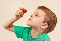 Menino bonito novo que come a morango doce fresca Imagens de Stock Royalty Free