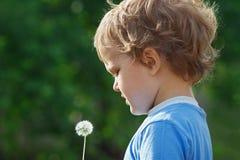 Menino bonito pequeno que prende um dente-de-leão Imagem de Stock