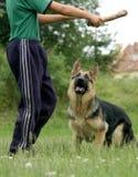 Menino com cão do lobo Fotografia de Stock