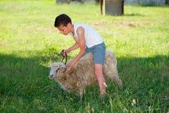 Menino com os carneiros na vila Foto de Stock
