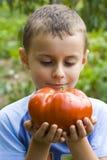 Menino com tomate gigante Fotos de Stock Royalty Free