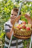 Menino com uma cesta das maçãs e da escada Imagens de Stock Royalty Free
