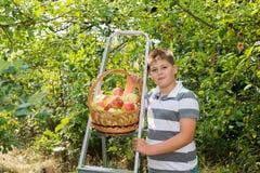 Menino com uma cesta das maçãs e da escada Fotos de Stock Royalty Free