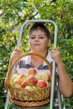 Menino com uma cesta das maçãs e da escada Imagem de Stock Royalty Free