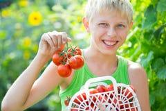 Menino com uma colheita dos tomates Fotografia de Stock