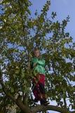 Menino da criança na escalada da árvore de Apple Foto de Stock