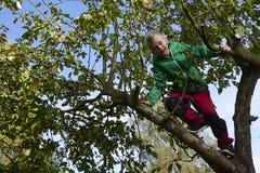 Menino da criança na escalada da árvore de Apple Fotografia de Stock