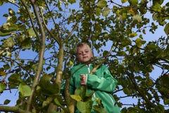 Menino da criança na escalada da árvore de Apple Imagens de Stock