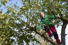 Menino da criança na escalada da árvore de Apple Fotos de Stock