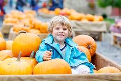 Menino da criança na exploração agrícola da abóbora que comemora a ação de graças Imagem de Stock Royalty Free