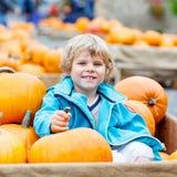 Menino da criança na exploração agrícola da abóbora que comemora a ação de graças Foto de Stock Royalty Free