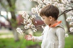 Menino da criança no tempo de mola perto da árvore da flor Imagem de Stock