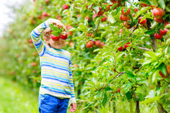 Menino da criança que escolhe maçãs vermelhas no outono da exploração agrícola fotografia de stock