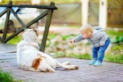 Menino da criança que joga com cão Imagem de Stock Royalty Free