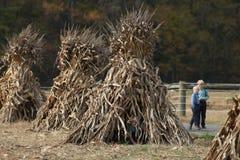 Menino de Amish que espreita fora de choque de milho Fotografia de Stock