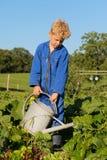 Menino de exploração agrícola com a lata molhando no jardim vegetal Imagem de Stock