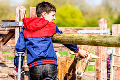 Menino deficiente da opinião do dia nas muletas que alimentam a cabra Fotografia de Stock Royalty Free