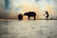 Menino do búfalo Fotos de Stock Royalty Free
