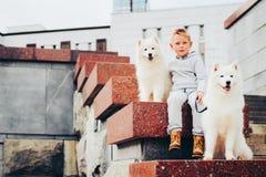 Menino e cães imagens de stock royalty free