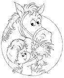 Menino e cavalo Fotografia de Stock Royalty Free