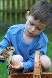 Menino e galinha Foto de Stock Royalty Free