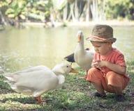 Menino e gansos Imagens de Stock Royalty Free