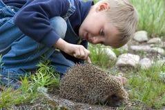 Menino e hedgehog Imagem de Stock