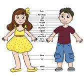 Menino e menina dos desenhos animados Vocabulário das partes do corpo Fotografia de Stock Royalty Free