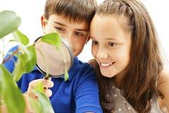 Menino e menina que olham uma planta através de uma lupa fotografia de stock