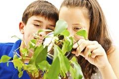 Menino e menina que olham uma planta através de uma lupa imagens de stock