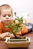Menino e os bonsais Fotos de Stock Royalty Free