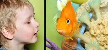 Menino e peixes Fotos de Stock Royalty Free