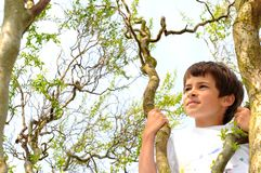 Menino em uma árvore Foto de Stock