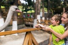 Menino emocional pequeno com a avestruz da alimentação da mãe no jardim zoológico do contato Foto de Stock Royalty Free