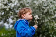 Menino feliz que purga sementes do dente-de-leão imagem de stock