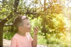 Menino feliz sobre a coleta da bio maçã fresca em uma exploração agrícola fotos de stock