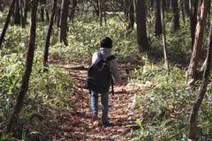 Menino japonês em uma caminhada Fotos de Stock