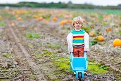 Menino louro bonito da criança com as abóboras grandes no remendo Imagens de Stock Royalty Free