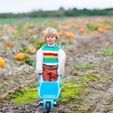 Menino louro bonito da criança com as abóboras grandes no remendo Foto de Stock Royalty Free