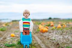 Menino louro bonito da criança com as abóboras grandes no remendo Fotografia de Stock