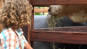 Menino na exploração agrícola de gado vídeos de arquivo