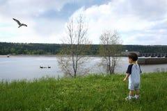 Menino na nadada de observação dos gansos do parque perto Fotos de Stock Royalty Free
